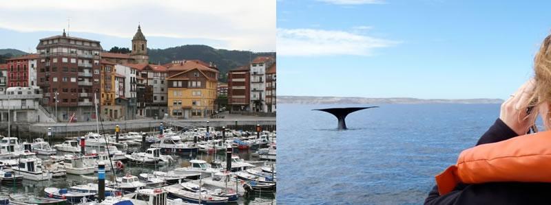 Avistamiento de ballenas en Urdaibai